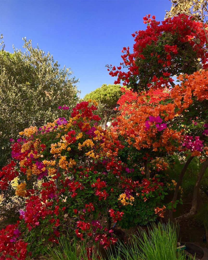 Flowers lots of them and they come in different colors. - Lebanon in ...