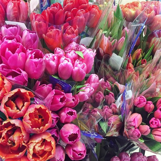 Tulips lebanon in a picture for What season are tulips