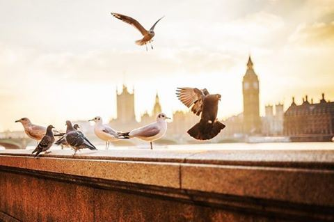 Time is flying,,, Never to return...🌇🌇🌇 صباح_الخير  goodmorning ... (London, United Kingdom)