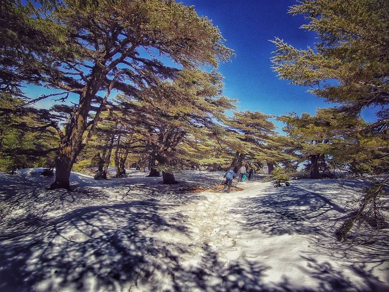 Take me to the  cedars ❄ cedars  natureloversgallery  naturephotography ... (Barouk Cedar Forest)