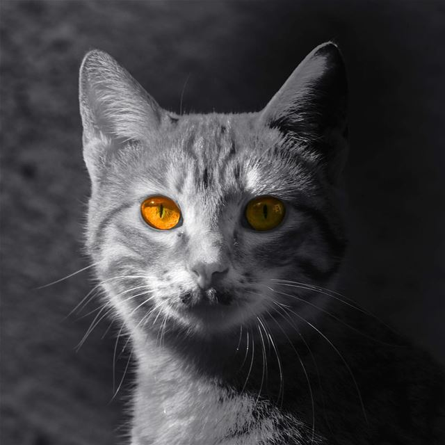 And the magic will always be in the eyes ...  chat  cat  gata  gato ...
