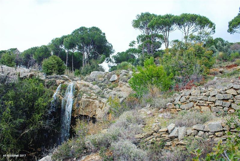tb  bzebdine  mountlebanon  waterfall  pine  trees  nature  naturelovers ... (Bzébdîne, Mont-Liban, Lebanon)
