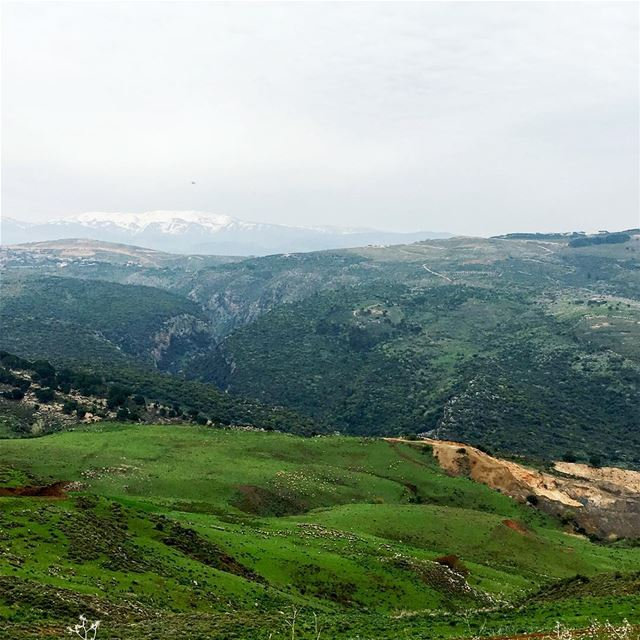 Can u spot those sheeps?!  beautiful_lebanon  livelovelebanon ... (3aychiyeh)