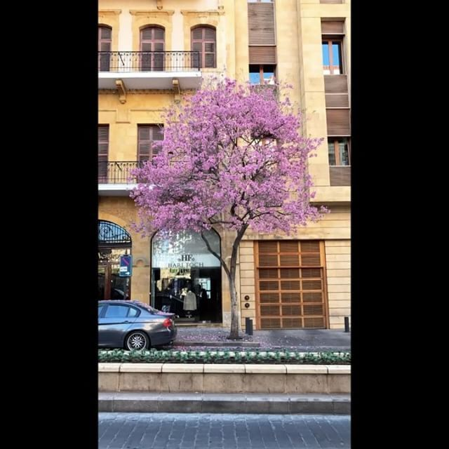 ..Back to Riyadh soon, back to school , back to reality & hopefully in... (Beirut Souks)
