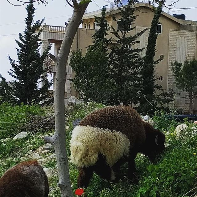 lebanon  goodmorning   enjoyweekend   mountlebanon   niceweather  ... (Aley)