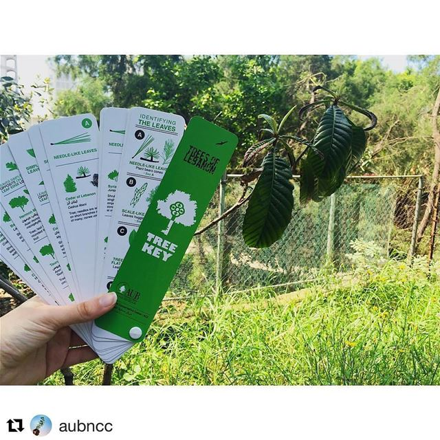 Repost @aubncc with @repostapp・・・Can we take a moment to appreciate our...