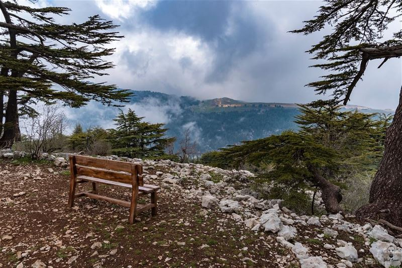 Just Sit back, Relax and Enjoy the View.... @tannourine_cedar_reserve @live