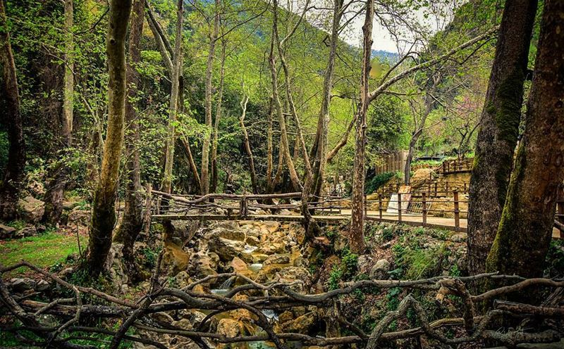 when in the Jungle  jungle  trees  lebanon  green  river  bridge  wood ... (Yahchouch)