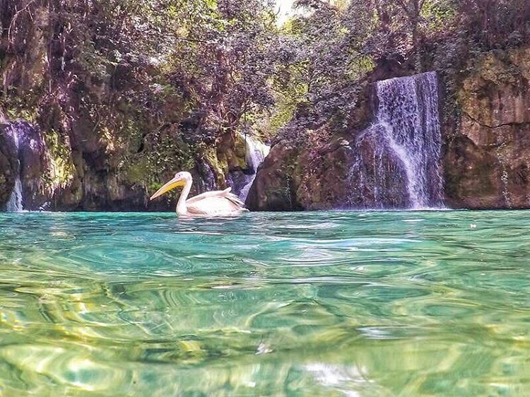 Just a pelican chilling 🦆 hikingGeneration  livelovehiking ... (Baakline, Mont-Liban, Lebanon)