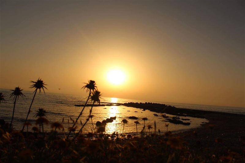sunset  catchthemoment  lebanon  lovenature  sundown  sunsetcaptures ... (Soûr, Al Janub, Lebanon)