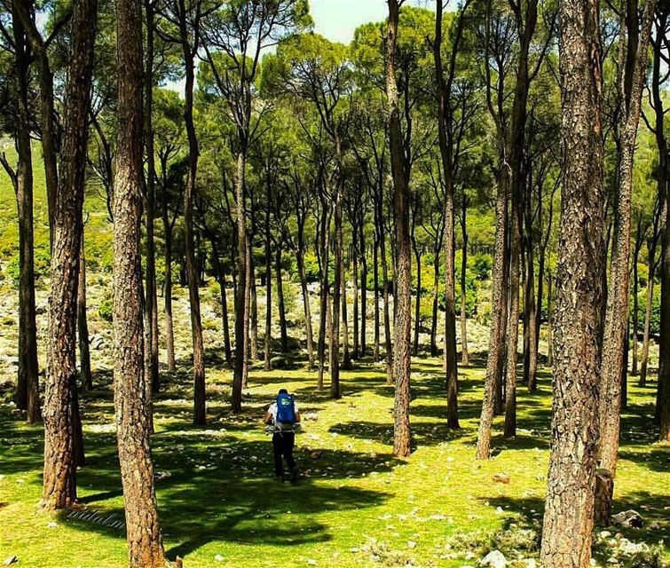 Forests in west Bekaa 🌳 by @nidal.majdalani  livelovehiking  trail ... (`Ammiq, Béqaa, Lebanon)
