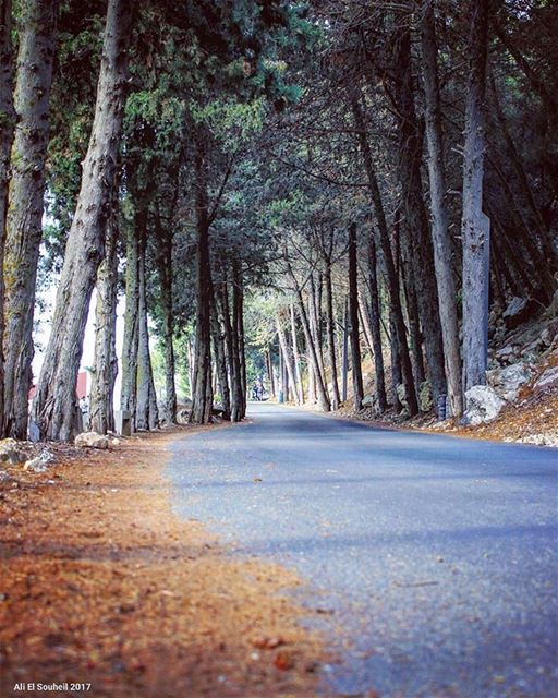 tb  tebnin  southlebanon  tree  road  perspective   spring   colorful ... (Tibnin)