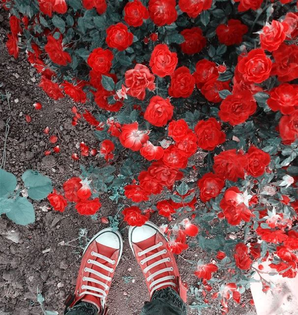 シAweSomeNesSツ photographer  flower  mycapture  instagram  lebanoninsta... (West Bekaa)