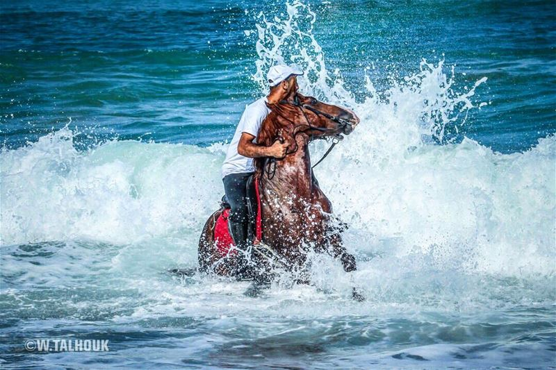 Ride more worry less...  horses  horse  horsesofinstagram  power  control ... (Saïda, Al Janub, Lebanon)