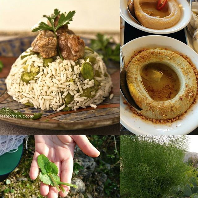 Both of these dishes contain herbs found in the wild and foraged by... (Beirut, Lebanon)