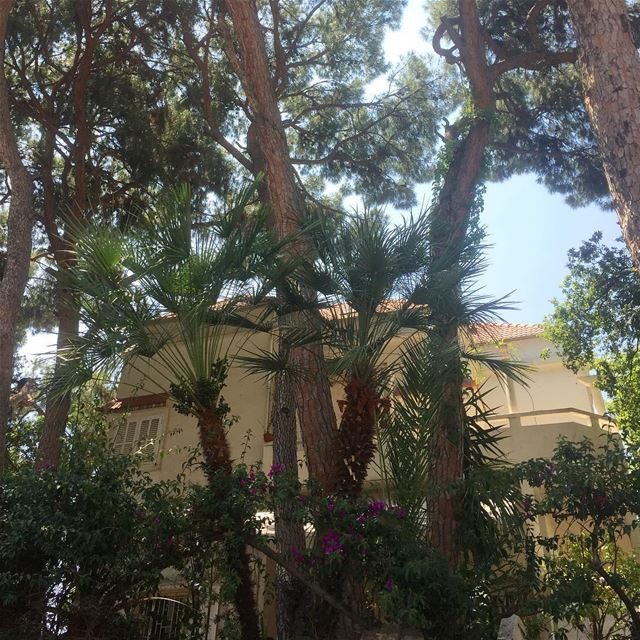 house  ig_lebanon  trees  nature  jounieh  landscape  livelovejounieh ... (Sarba, Mont-Liban, Lebanon)
