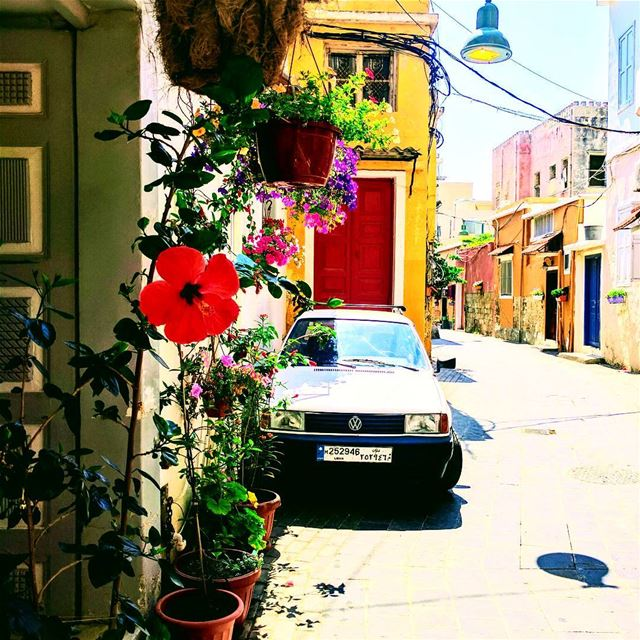 Tyre 🌹 red  flowers  antique  livelovelebanon  livelovesour ... (Tyre, Lebanon)