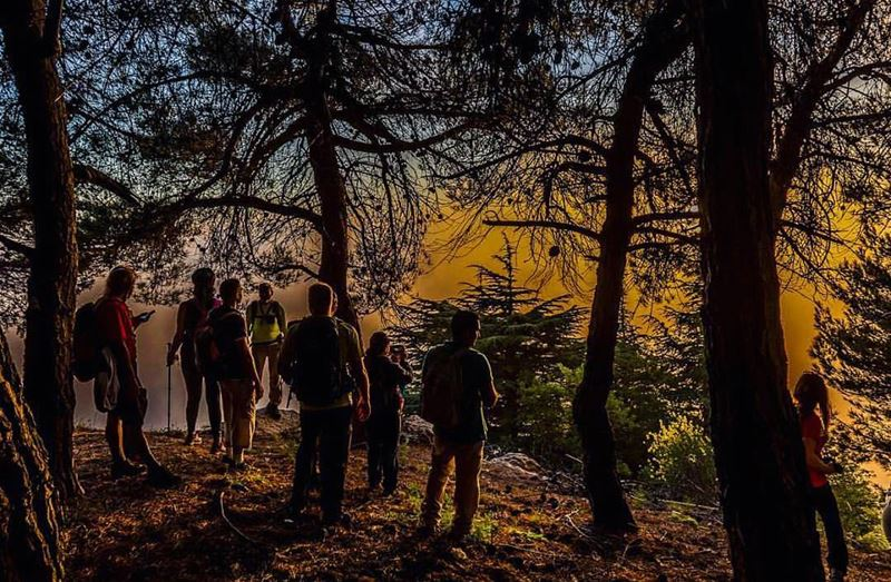 Into the woods 👨🏼‍🌾 by @treehugger961  livelovehiking  trail  hiking ... (Hammana)