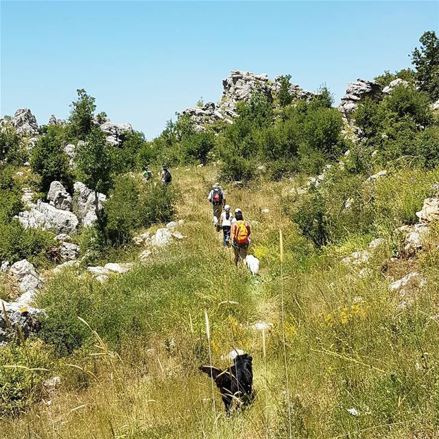 Walk your dog/s and help out amazing NGOs in Lebanon. An 8kms walk from...