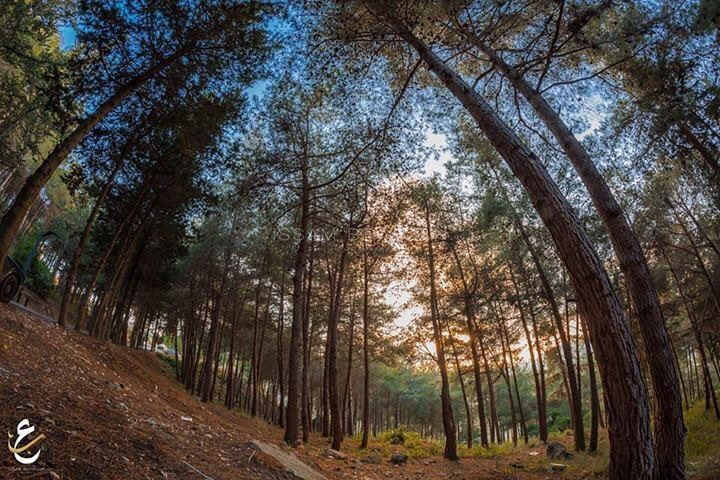 photography  fisheye  followforfollow  like4like  instabeauty  instagram ... (Tibnîne, Al Janub, Lebanon)