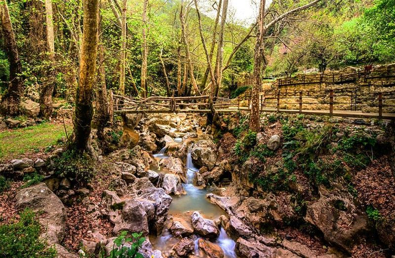 lebanon  green  nature  river  forest  snapshot  photo  photos ... (Yahchouch)