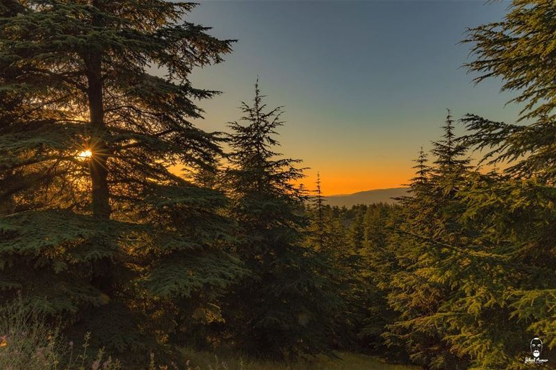 A warm and unique Shouf's Sunset!...