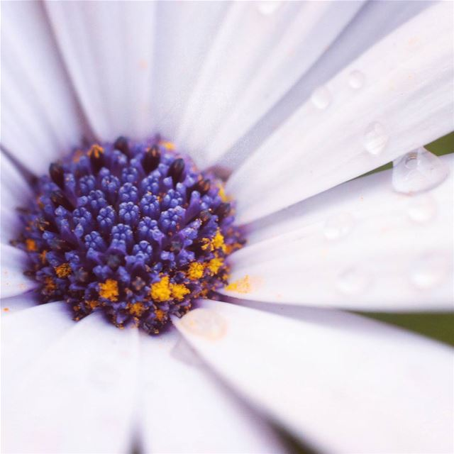 Let's have a nice day !   flower  pollen  fleur  purple  white  waterdrops...