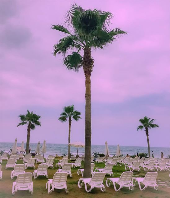 The beach to myself?  landscape  beach  palmtrees  landscape_captures  sea...
