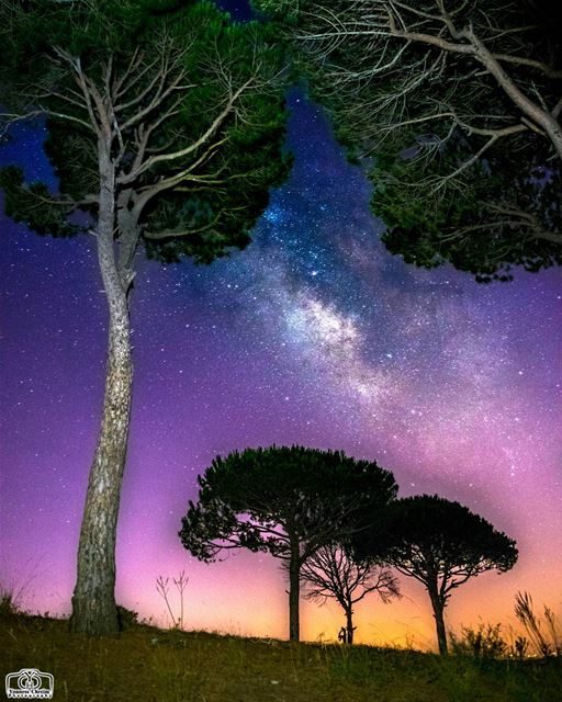 Milkyway in the forest  milkyway  stars  astronomy  tree  trees  pine ...