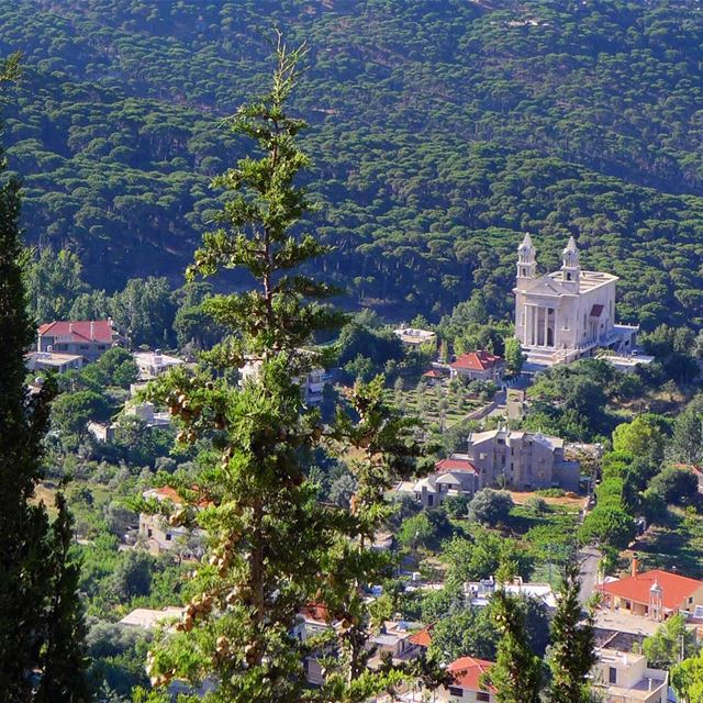The beauty of pine trees' valley of Bkassine, the largest in the middle... (Jezzîne, Al Janub, Lebanon)