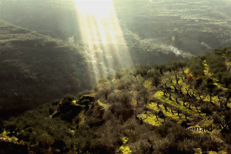 landscape  morning  sunshine  sunrays  trees  smoke  riseandshine ... (Karkha, Liban-Sud, Lebanon)
