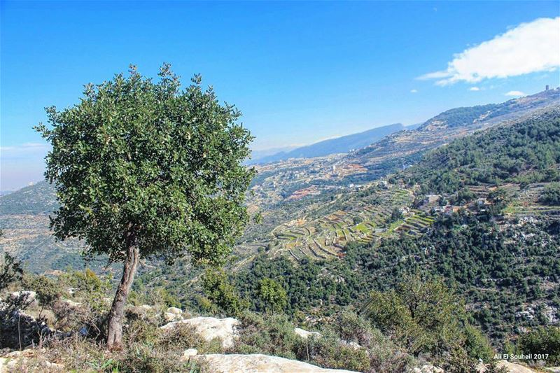 tb  tree  nature  sky  northlebanon  kfarhabo  colorful  livelovelebanon ... (Ouâdi Kfar Habou)