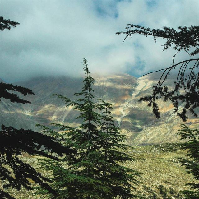 ~☁🌲☁~... nature  lebanon  bcharre   cedars  forest  mountains  green ...