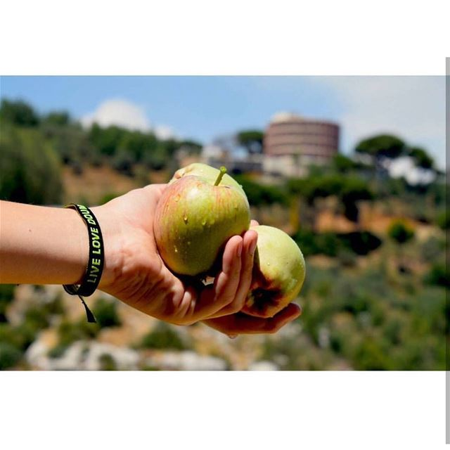 You can count the seeds in an apple.But you can't count the apples in a... (Douma, Liban-Nord, Lebanon)