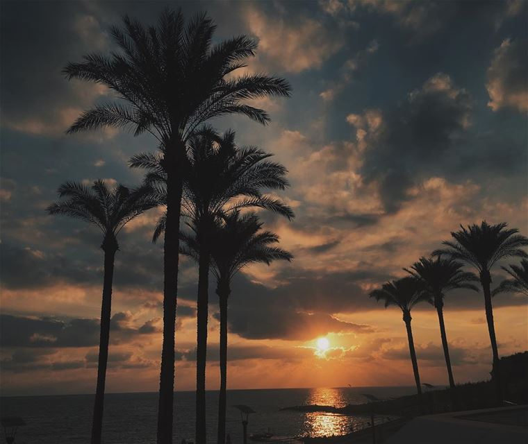 photography  landscapephotography  nature  palmtrees  sunset ...