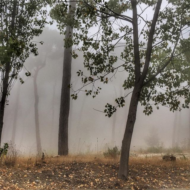 And the weather is like ...  Trees  Shadows  Fog  LiveLoveLebanon ... (Matn District)
