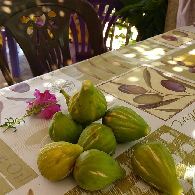 A few figs from a nearby tree.  figs  figtree  Lebanon  chouf  pickyourown... (Kfar2atra Chouf)