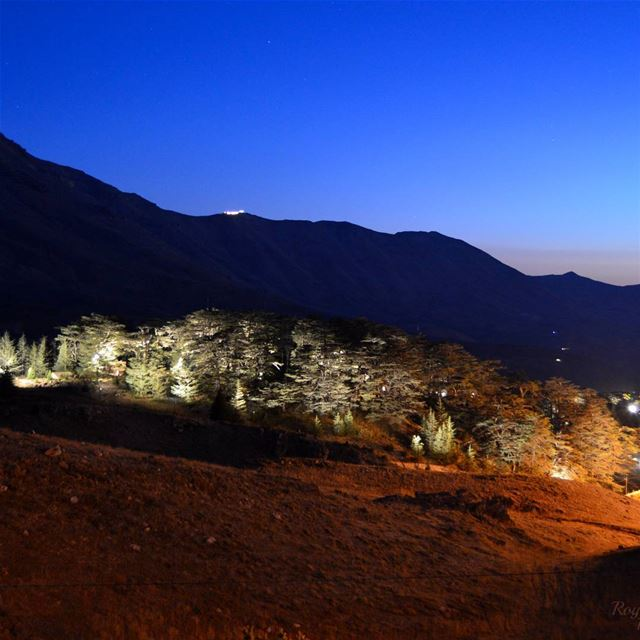 Good Night from  cedarsoflebanon  cedarsofgod  cedars  arez ... (Cedars Festival)