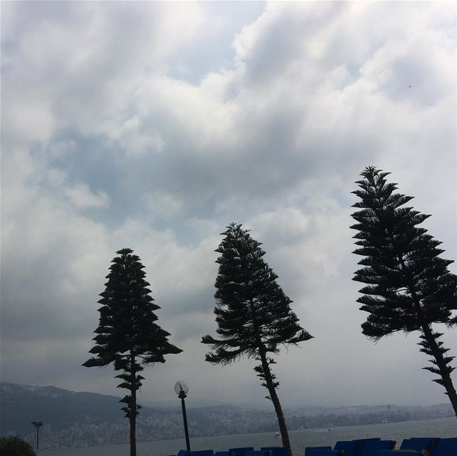 lebanon  mediterranean  trees  mountains  nature  instalike ...