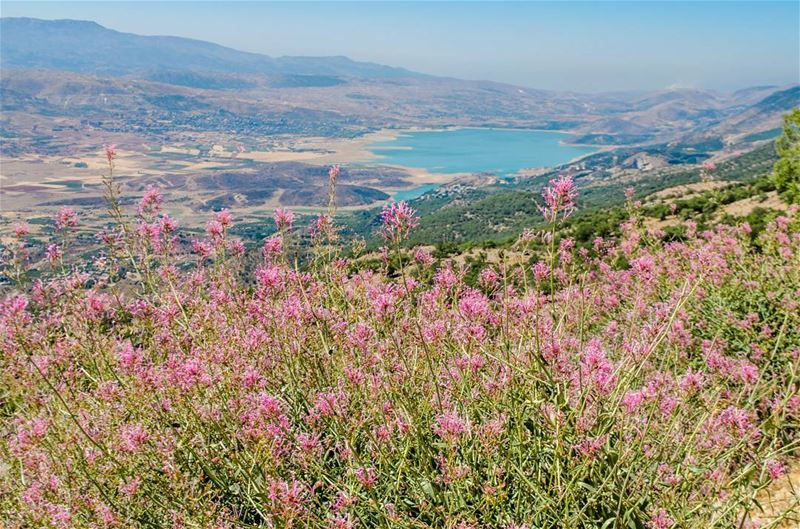 All the  colors all the  love ♥️♥️............. Lebanon ... (West Bekaa)