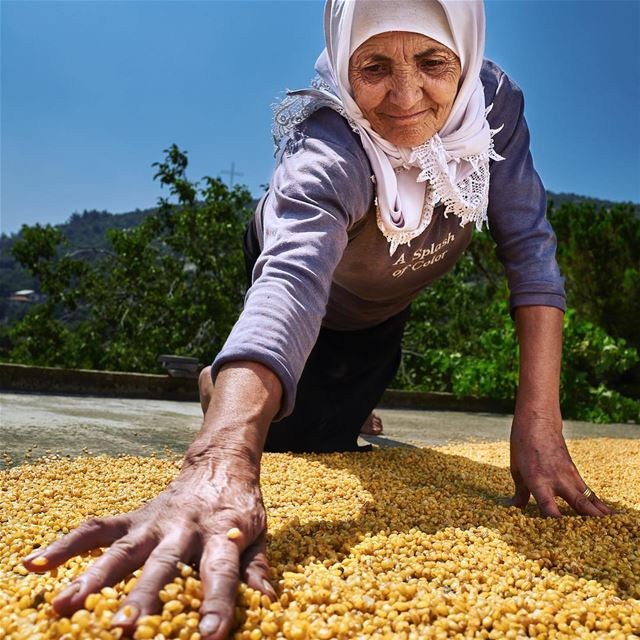 Gold Spread.Very few people still  cultivate,  harvest and  prepare their...