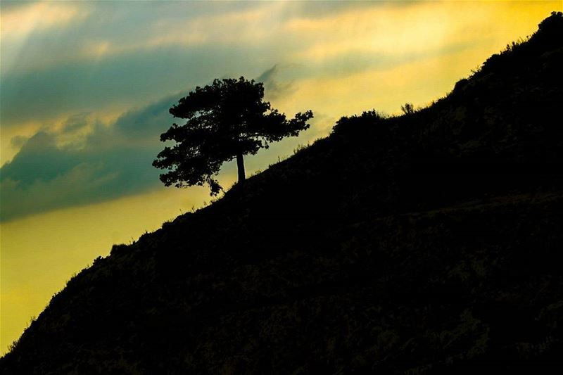 Be strong enough to stand alone . tree  dusk  sunset  mountain  slope ...