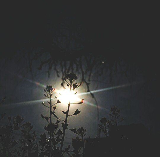 sun  sky  mycapture  shadow  tree  flower  sunrays  heartflower ...