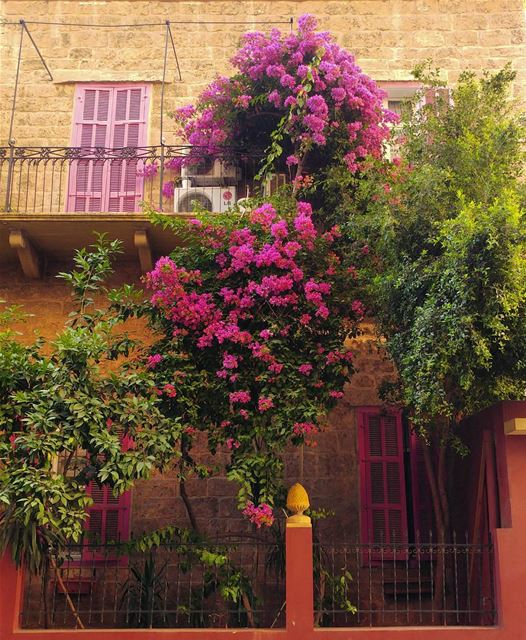 I like gardens surrounded with houses 🏡 (Abd El Wahab Street)