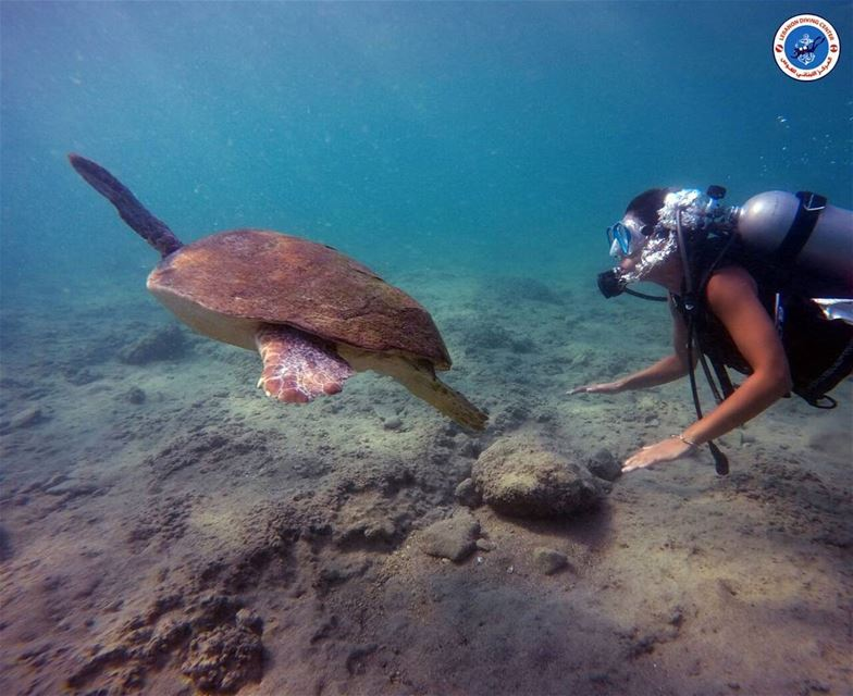 diving @lebanondivingcenter @livelove.tyre  turtle  crystalclearwater...