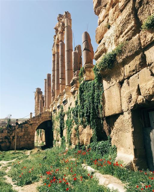 livelovebeirut  livelovelebanon  insta_lebanon  livelovenature ... (Baalbek, Lebanon)