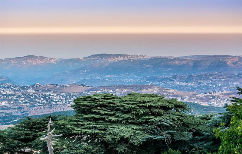 "The beautiful cedars of Lebanon ""Cedars Of God"" that lives more than 2000... (Shouf Biosphere Reserve)"