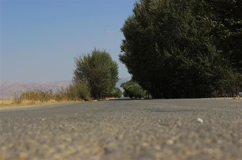 Till the end   road  horizon  bekaa  landscape  livelovelebanon ... (`Ammiq, Béqaa, Lebanon)