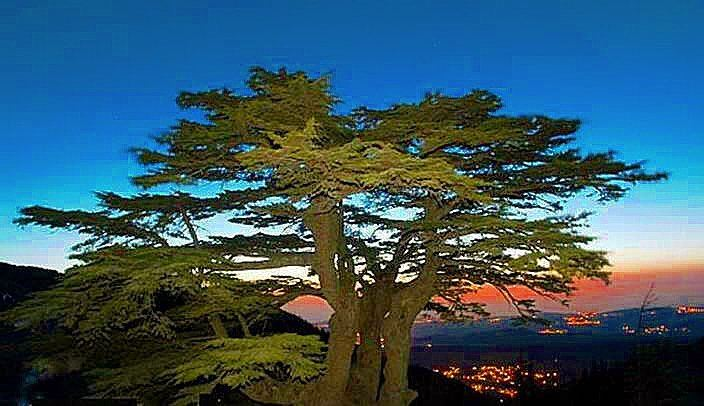 ارز  الرب  Cedars Of  God ... luxury luxurylife luxurylifetime... (Cedars of God)