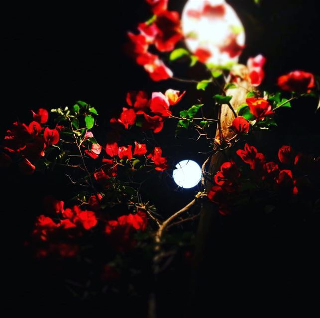 """Let's tango"", asked the moon to the flowers .  moon  light  moonlight ..."
